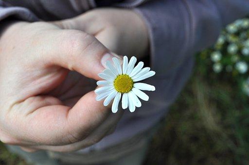 Flower, Hand, Daisy, Gift, Romantic, Flowers, Yellow