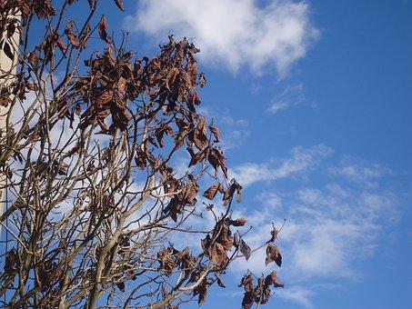 Bogotá, Dried Leaves, Soledad, Sadness, Sad, Tree