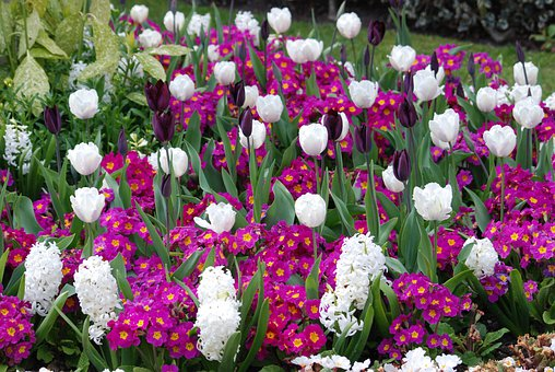 Tulips, Flowers, Wildflowers, Floral, Plants, Natural