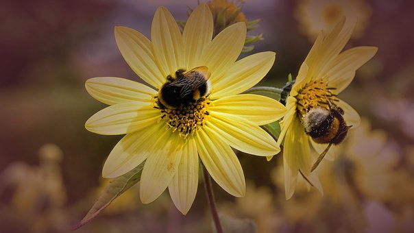 Bees, Blossom, Bloom, Close, Filter Effect, Yellow