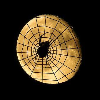 Spider, Moon, Cobweb, Halloween, Dreiviertelmond