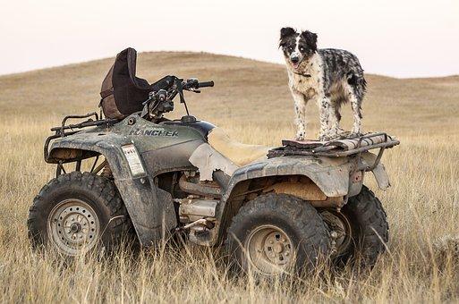 Atv, Dogs, Four Wheeler, Dog Standing, Pasture