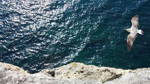 Sea, Seagull, Freedom, Naples, Water, Animals, Flight
