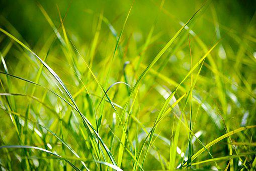 Grass, Field, The Background, The Sun, Sunny, Green