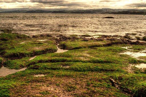 Seaside, England, Hdr, Coast, Sea, Bay, Nature, Green