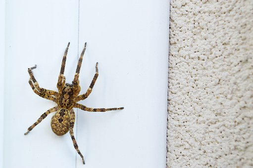 Spider, Insect, Big, Prey, Nature, Insects, Spiders