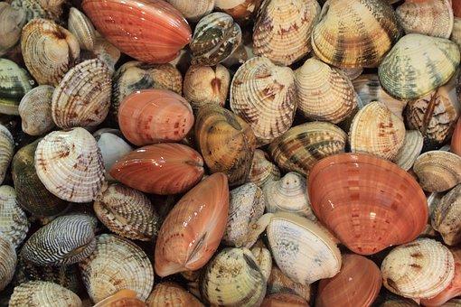 Italy, Naples, Food, Vendor, Seafood, Market