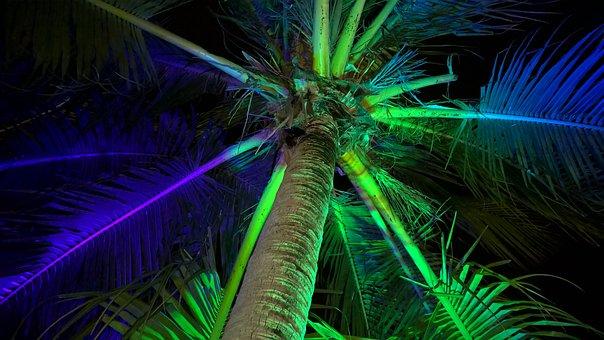 Palm, Light Effect, Beach, Night, Flash