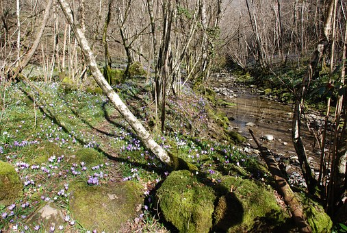 Nature, Trees, Landscape, Moss, Stream, Forest, Sassi