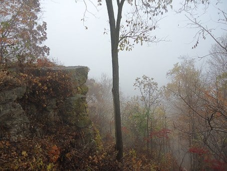 Great River Bluffs State Park, Fog, Scenic, Forest