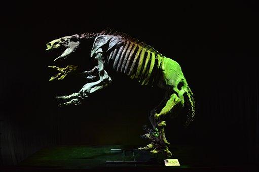 Dinosaur, Replica, Sample, Technopolis, Skeleton