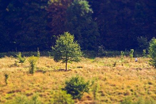 Tree, Forest, Nature, Landscape, Mood, Forests