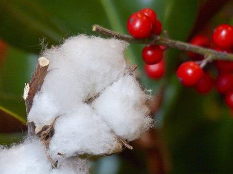 Christmas, Decoration, Ornament, X-mas, Holly, Berry