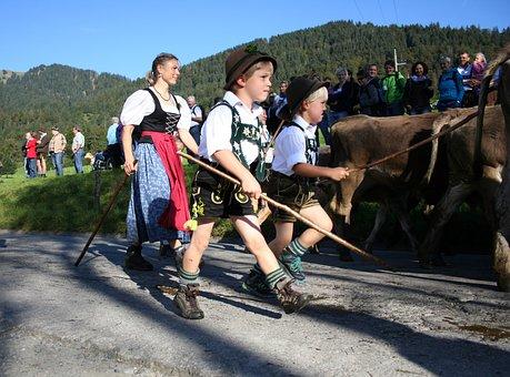 Allgäu, Bavaria, Bavarian, Cows, Cow, Costume