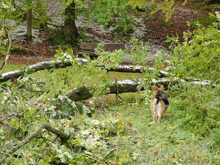Forest, Tree, Destroyed, Damaged, Nature, Landscape
