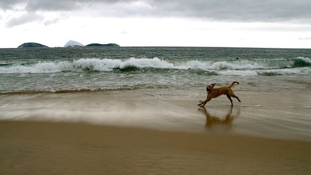 Dogs, Beach, Running, Playing, Playful, Waves, Water