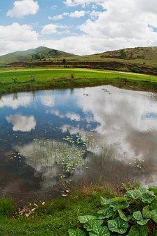 Countryside, Rice Field, Fish Pond, Fisheye, Water