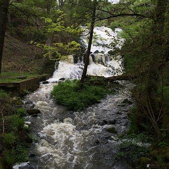 Brook, å, Water, Fors, Nature, Beautiful, Green, Rest