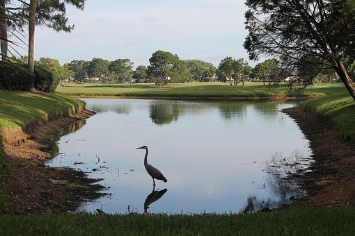 Blue Heron, Ponte Vedra, Beach, Golf Course, Florida