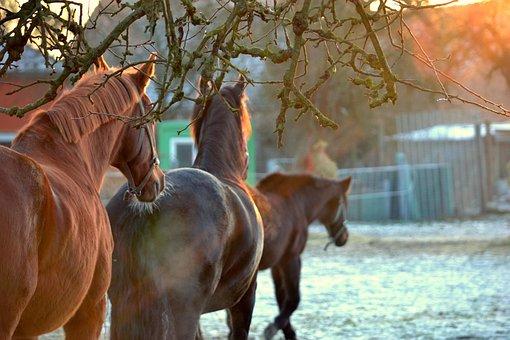 Horses, Sunset, Landscape, Nature, Atmosphere, Mood