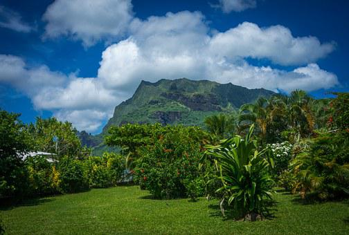 Moorea, Garden, South Pacific, French Polynesia, Exotic
