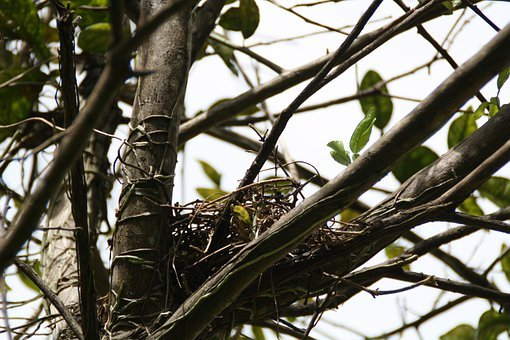 Nest, Empty, Tree, Straw, Bird, Home, Branch, Twig, New