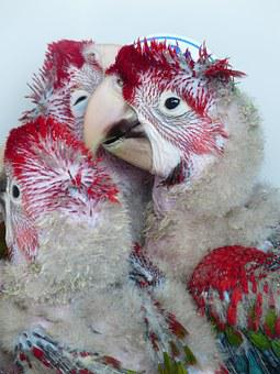 Parrots, Young Birds, Rearing, Young Animals, Anxious