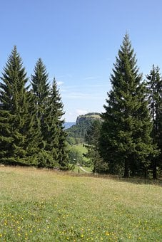 Idyll, Nature, Reported, Firs, Landscape, Lochenstein