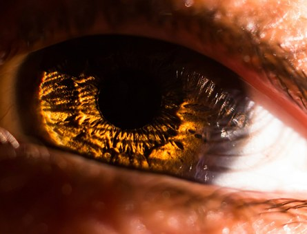 Eye, Macro, Iris, Pupil, See, To Watch, Look, View