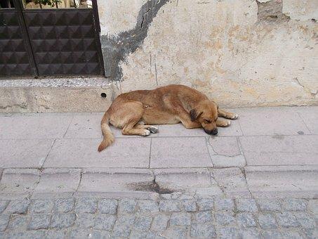 Cute, Dog, Asleep