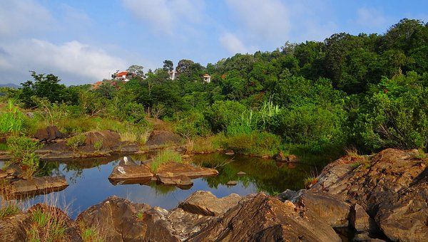 Evergreen Forest, Western Ghats, Sharavati River