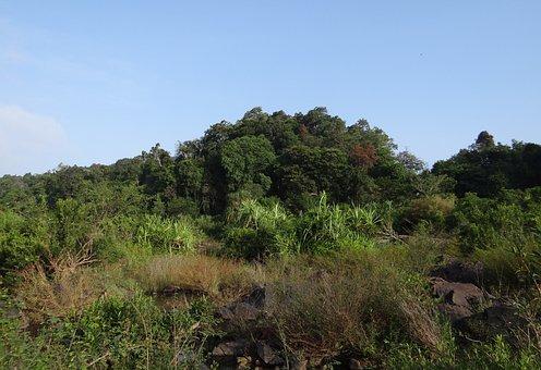 Vegetation, River Bed, Sharavati River, Jog, Falls