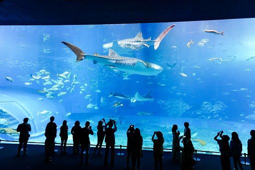 Aquarium, Fish, Underwater, Sea, Aquatic, Glass