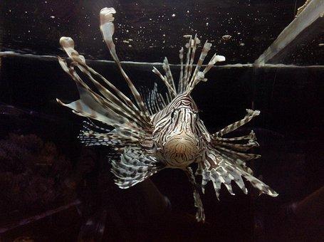 Lionfish, Fish, Aquarium, Water, Sea, Nature, Marine