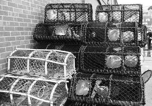 Crab, Trap, Fishing, Industry, Lobster, Catch, Fish