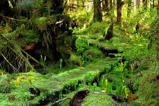 Moss, Forest Trees, Skunk Cabbage, Woods