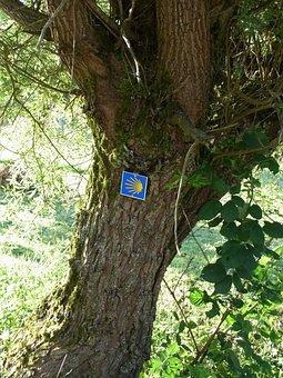 Jakobsweg, Shell, Tree, Away, Target, Hiking, Faith