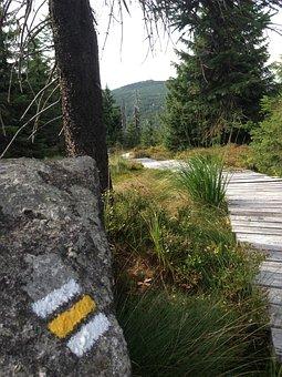 Jizera Mountains, Path, Forest, Nature, Trees, Bohemia