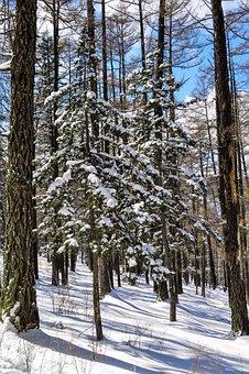 Winter, Snow, Mountain, Cold, Season, Nature, Mongolia