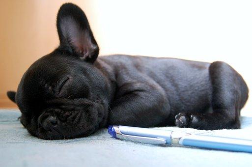 Dog, Dogs, Bulldog, French Bulldog, Sleep, Puppy