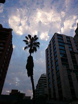 Clouds, Sunset, Palm Tree, Backlight, Santiago De Chile