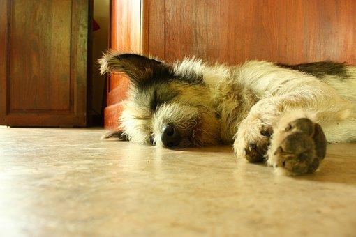 Dog, Sleep, Asleep