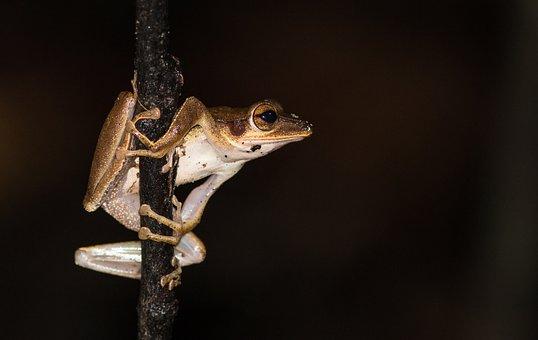 Pat, Amphibian, Night Animals