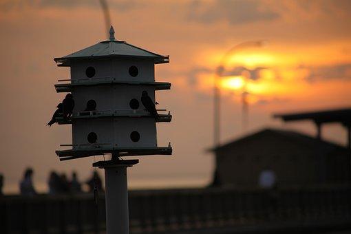 Bird House, Sunset, Purple Martins, Bird, Fly, Wings