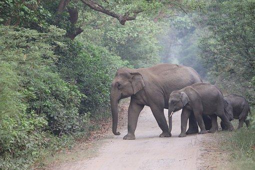 Female, Elephant, Cub, Trunk, Tusk, Animal, Wildlife