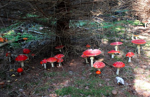 Lucky Guy, Luck, Fly Agaric, Autumn, Nature, Good Luck