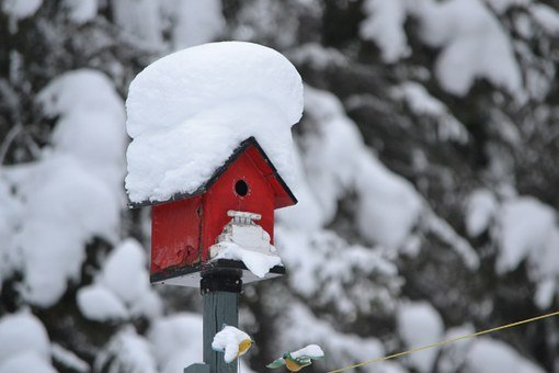Bird House, Red, Winter, Frozen, House, Bird, Nature