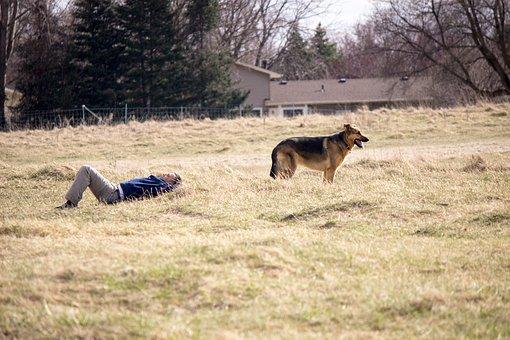 Park, German Shepard, Dog, Outdoors, Resting, Animals