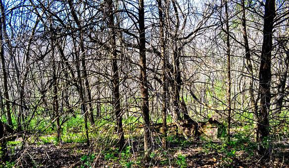 Park, Tree, Nature, Forest, Outdoor, Spring, Leafless