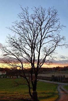 Autumn, Tree, Leafless, Fall, Finland, Landscape